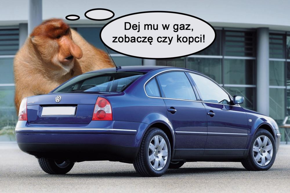 janusz_gaz