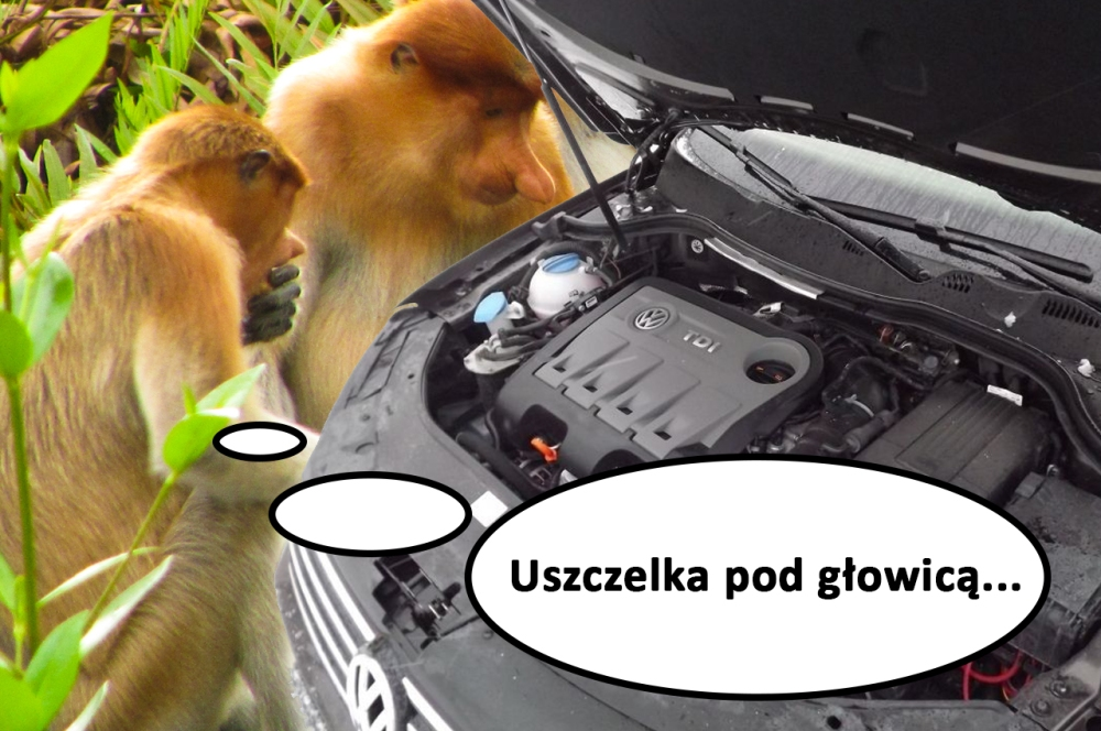 janusz_uszczelka